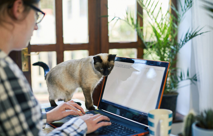 Homeworker with cat