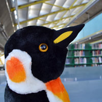 Pablo the library penguin